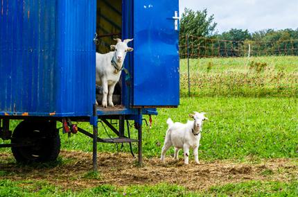 Biohotel Lindengut Dipperz Demeter Landwirtschaft Tierhaltung Ziegen