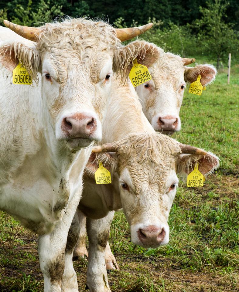 Biohotel Lindengut Demeter Landwirtschaft Kühe