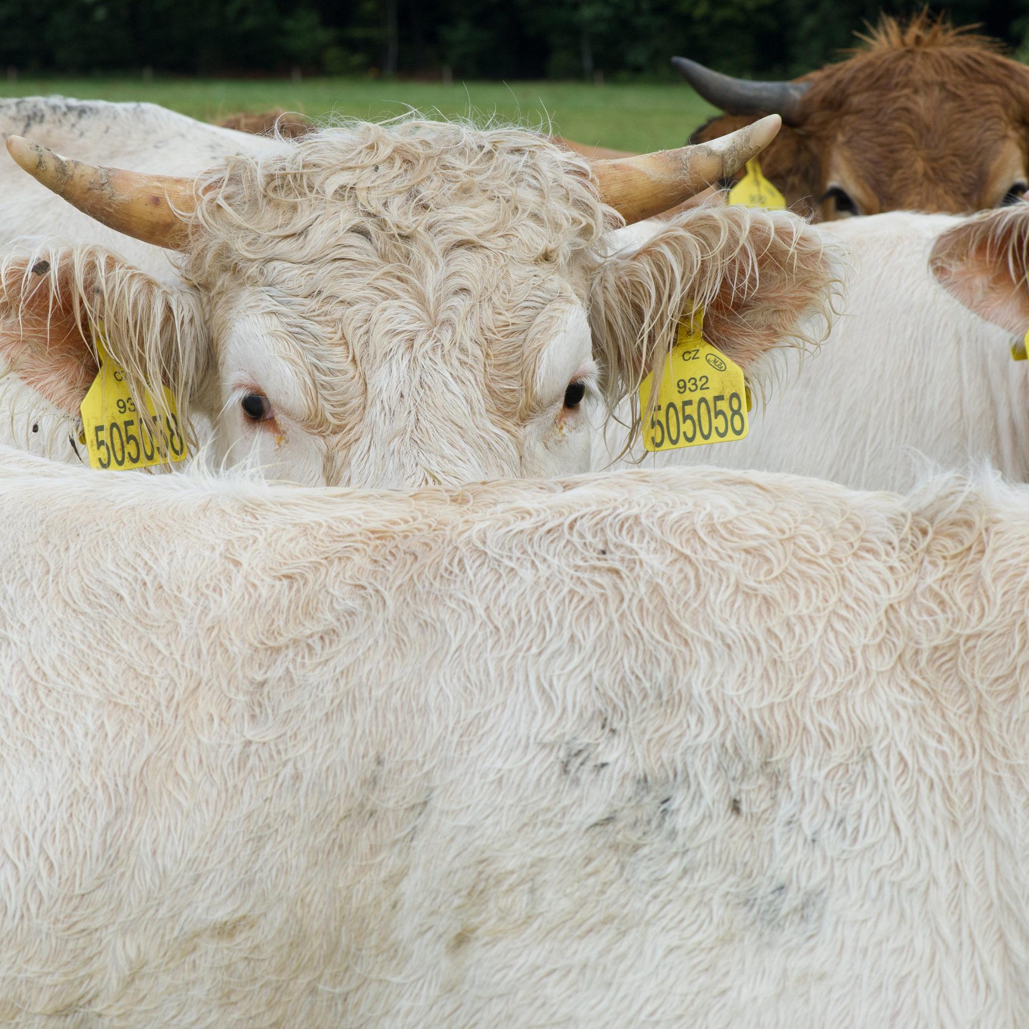 Biohotel Lindengut Dipperz nachhaltige Tierhaltung