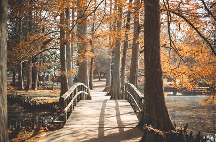 Biohotel Lindengut Fastenwandern in der Rhön Herbst