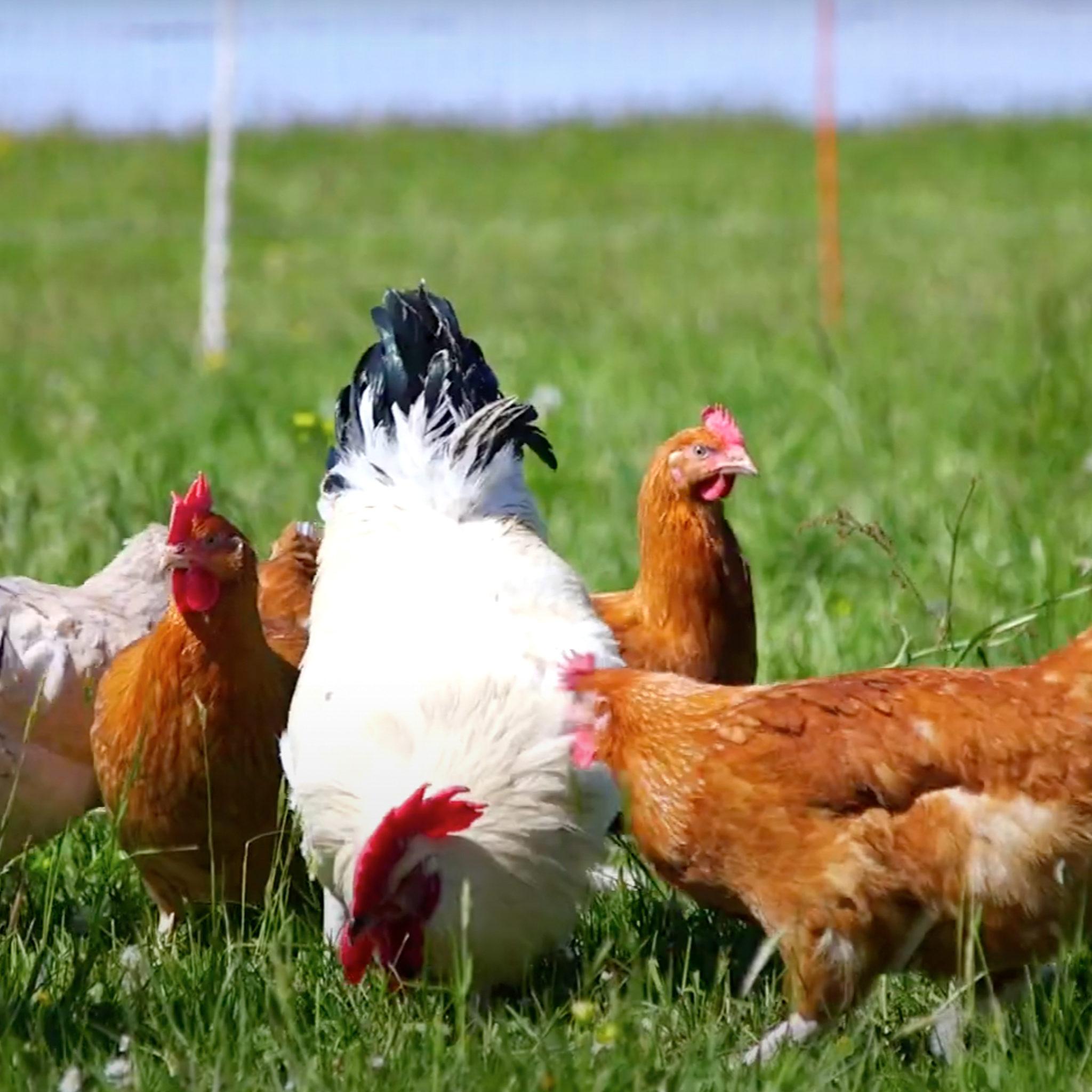 Biohotel Lindengut Dipperz Demeter Landwirtschaft Hühnermobil Hühner