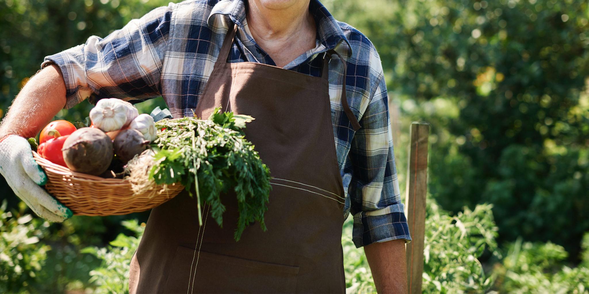 LindenGut Dipperz Gemüsekiste bestellen